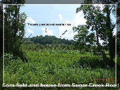 breezy_acres_orchard003003.jpg