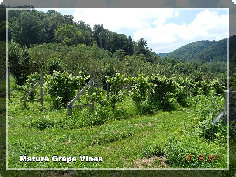 breezy_acres_orchard003020.jpg